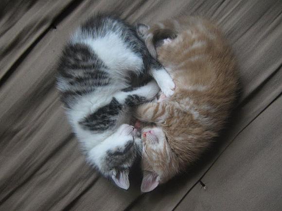 壁纸 动物 猫 猫咪 小猫 桌面 580_435