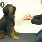 【あれ?消えた】犬に手品 → 反応が可愛すぎると話題