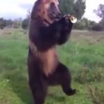 癒される。70匹の色んな動物たちがダンス!ダンス!ダンス!ノリノリでダンス!
