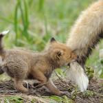 【動物の愛情】自然の中でも変わらず注がれる両親の愛23選