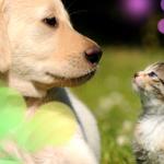 【犬と猫の親子】生後間もない子猫に「全てを捧げる犬」の愛情にグッくる
