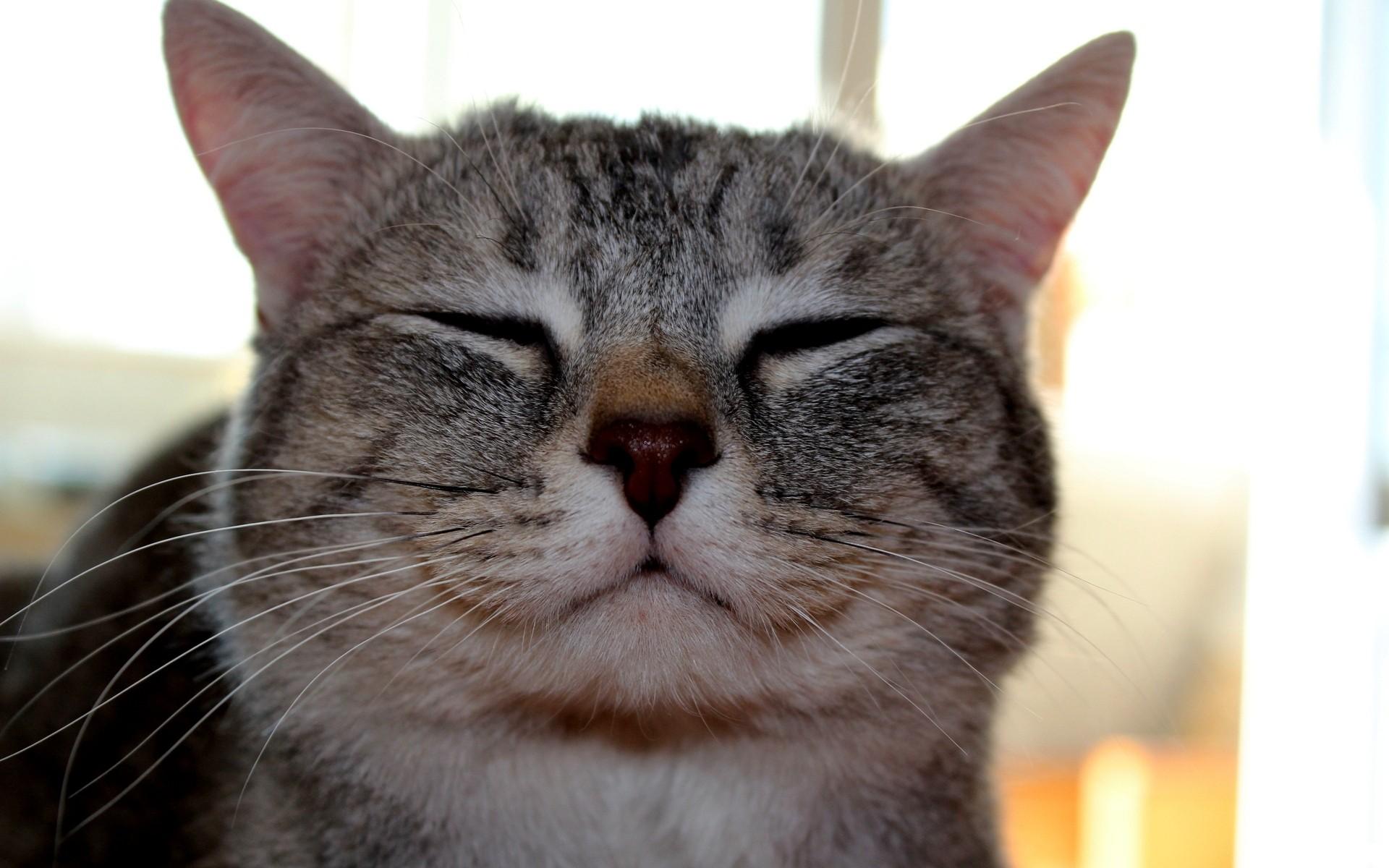 ネコの口20
