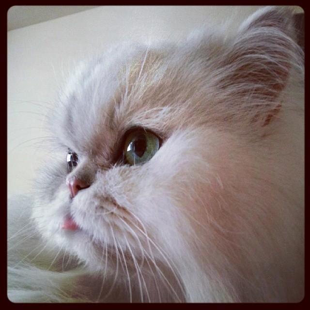 ネコの口7