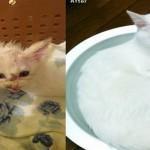 【愛情の賜物】回復して本当によかった!捨て猫ビフォーアフター10選