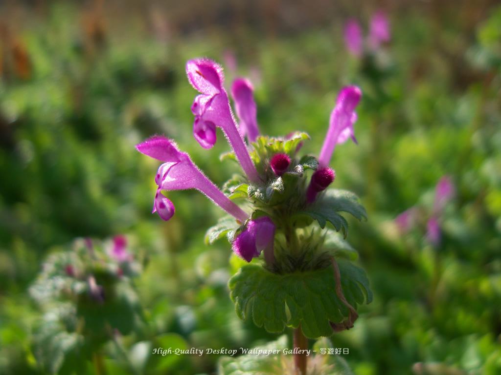 g02_flower012-1024