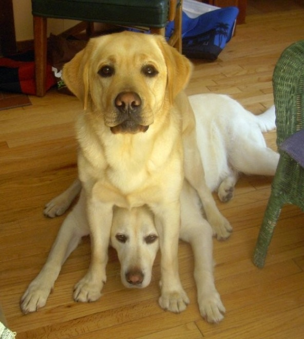dogs-sit-wherever-they-fit-16