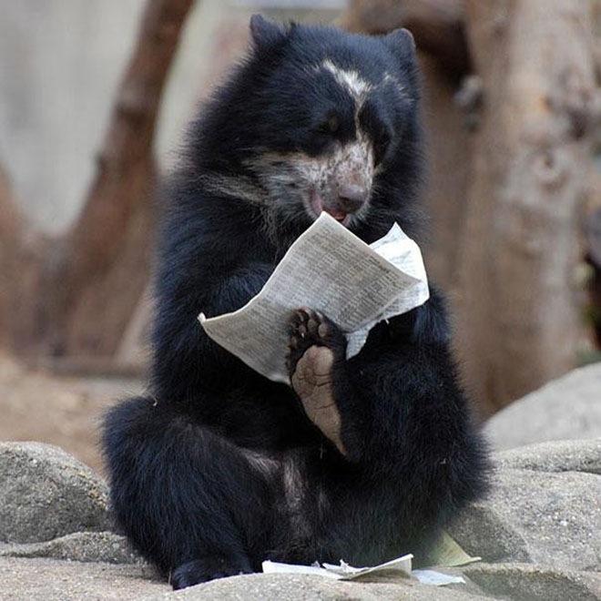 bears-acting-like-humans-2