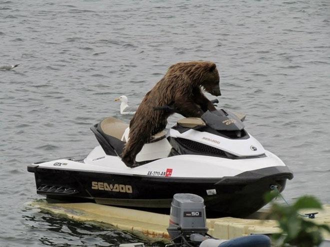 bears-acting-like-humans-5