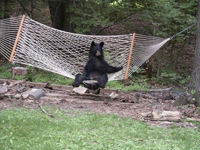 bears-acting-like-humans-7