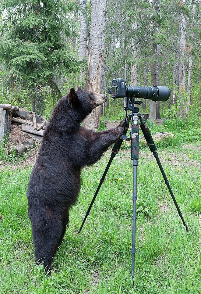 bears-acting-like-humans-9