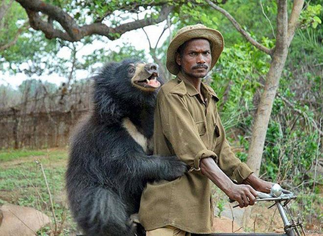 bears-acting-like-humans-12