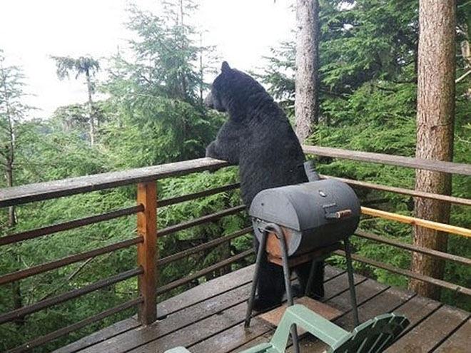 bears-acting-like-humans-13