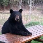 ある日森の中クマさんに出会ったら人間みたいだった。19選