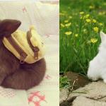 これぞキュンキュン感!「ウサギの赤ちゃん」の可愛さを再確認する画像(20枚)