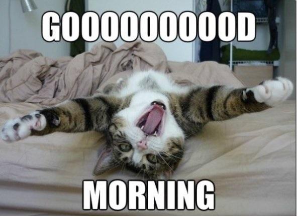 Funny Good Morning Grumpy Cat Funny Good Morning Grumpy Cat Funny Good ...