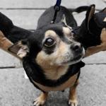 【またご主人が変なことしてるよ】犬のシュールなハロウィンコスチューム22選