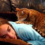 【モミネコ】ネコの手も借りたい。モミモミ(マッサージ)してくれるネコたち