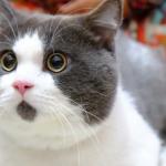 ビックリだにゃん!常に表情が「WOW」なネコがかわいすぎる
