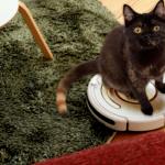 ネコに染められているとわかる16の変化