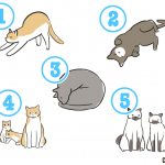 【性格診断】ネコがあなたを待っていました。一体どんなポーズをしていたでしょう?