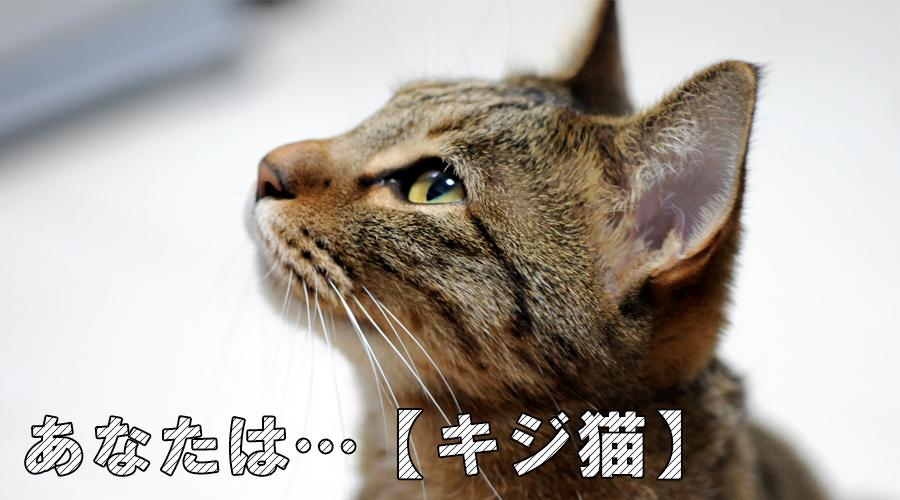 猫診断 キジ猫