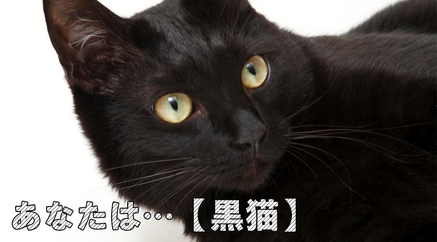 猫診断 黒猫