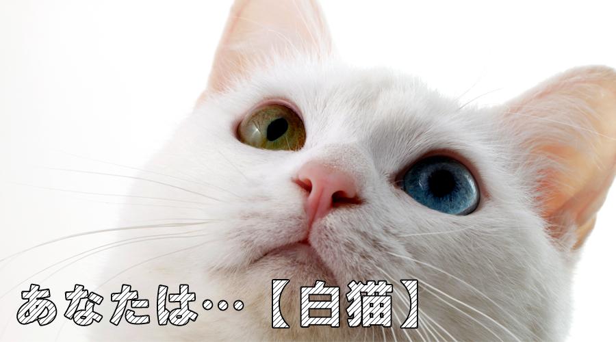 猫診断 白猫