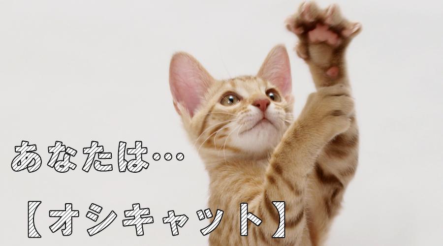 猫診断 オシキャット