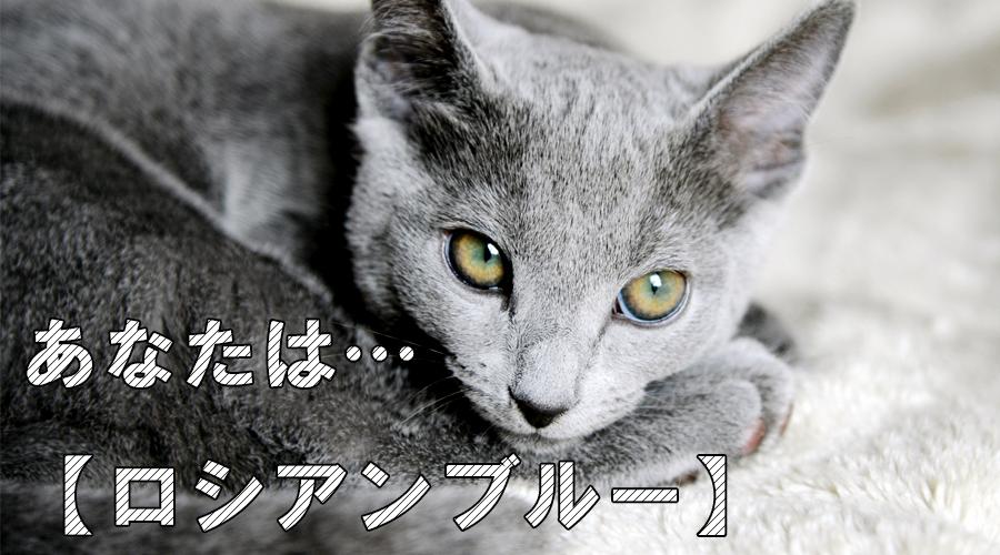 猫診断 ロシアンブルー