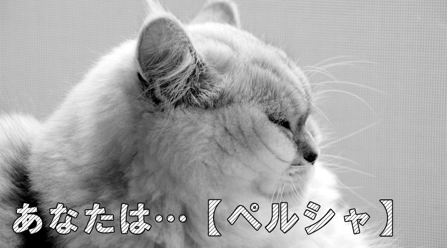 猫診断 ペルシャ
