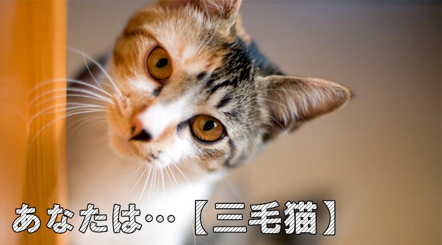 猫診断 三毛猫