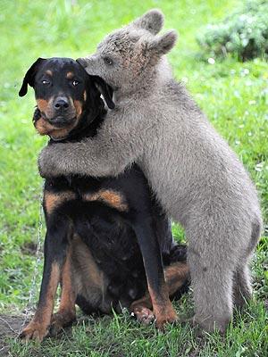 dog fact3