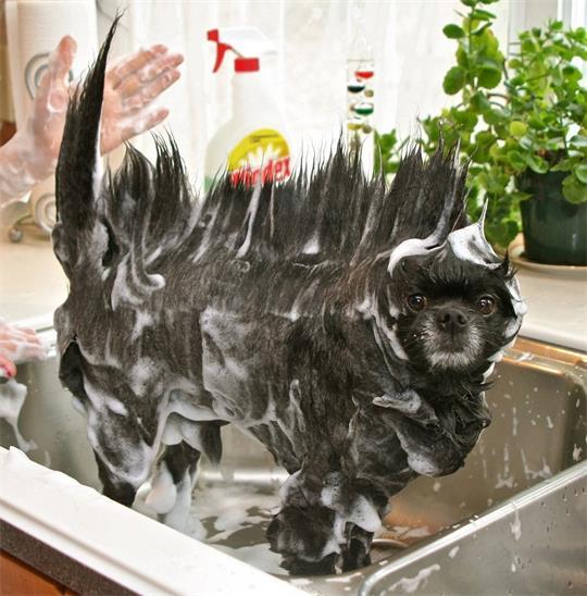 funny-dog-bath-shampoo