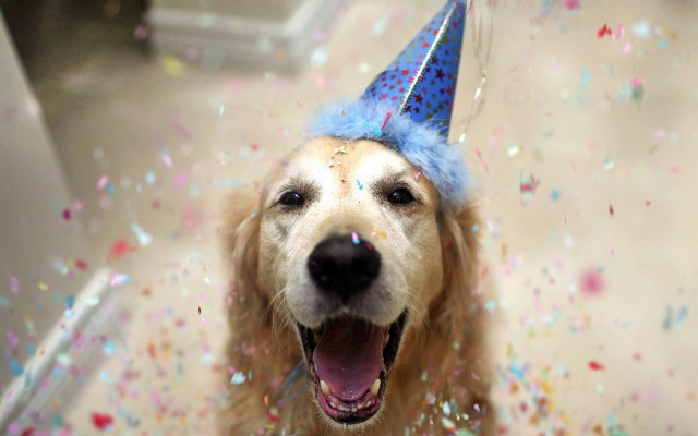 Party-Dog-with-Birthday-Hat