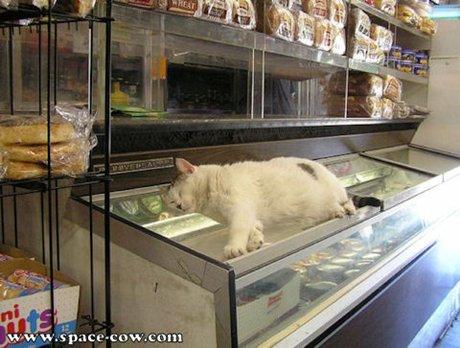 cat-sleep30