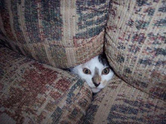 mit-katzen-verstecken-spielen_5