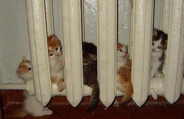 a.baa-Cats-on-warm