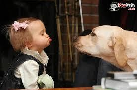 dogchild12
