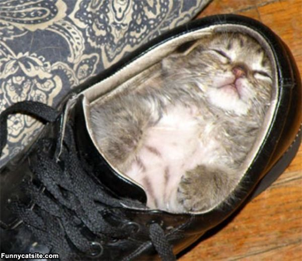 I_Sleep_In_A_Shoe