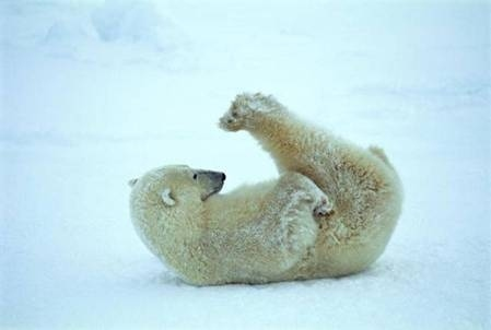 Polar-Bear-Plow-Pose