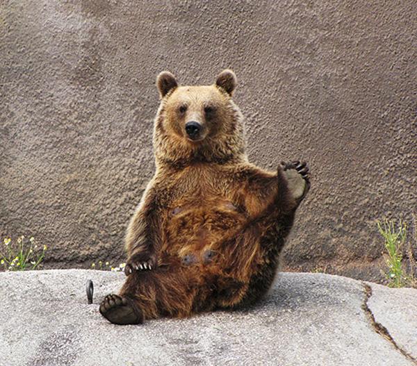 funny-yoga-bear-003