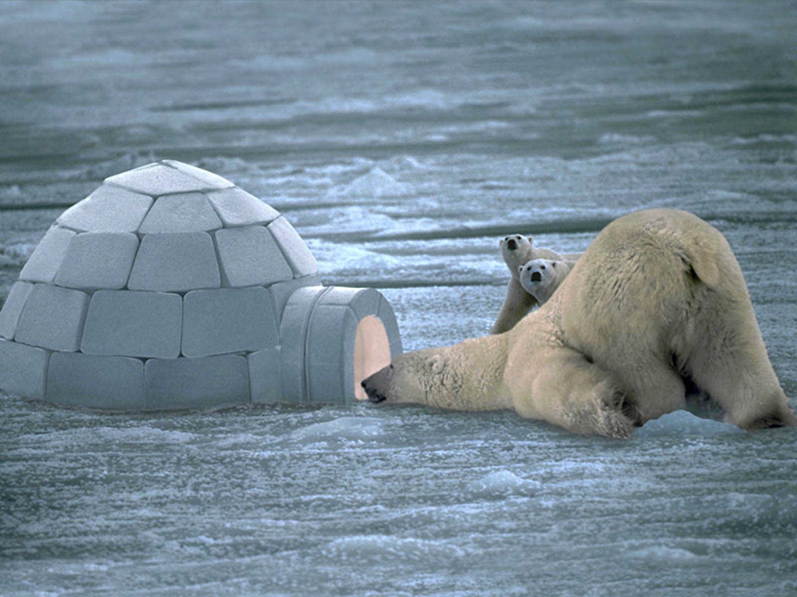 Funny Bear Wallpapers 3
