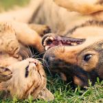 捨てられた子ネコを世話したのは、捨てられた犬だった。