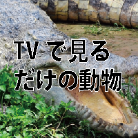 q_5_2
