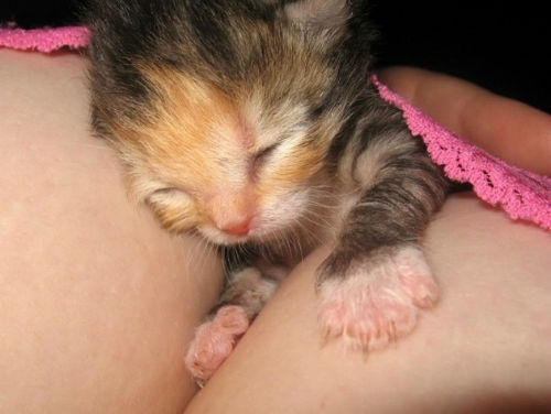 Cleavage-Kitten-2