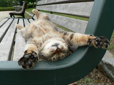 back-cat-cute-kitty-lying-Favim.com-306431