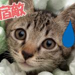 【永遠の宿敵】ネコ VS 静電気の仁義にゃき闘い