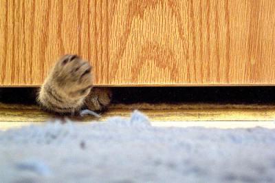 paw under door