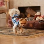 【ギネス記録を持つ犬】2足歩行で世界一速く走れるポメラニアン「ジフくん」が話題
