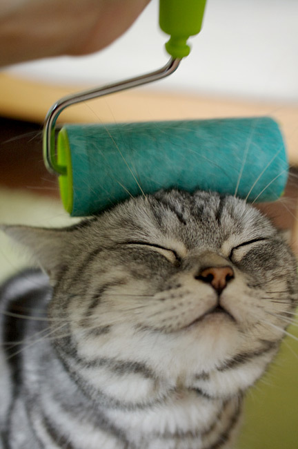 cat-paint-roller-head-smug-12850047987